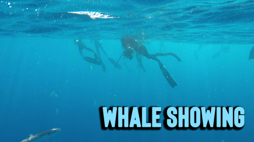 'Magdalena Bay: HUGE Whale shows up out of nowhere & SWALLOWS a whole bait ball '
