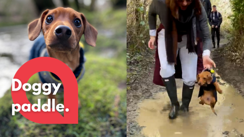 Adorable pup is carried over puddle whilst doggy paddling in the air - RAW