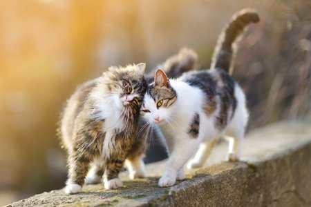 10 Things to Know About Cats and Headbutting