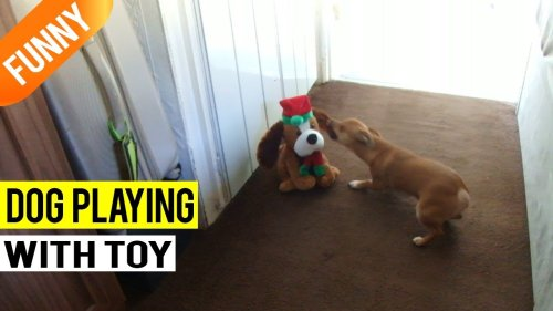 'Excited doggo acting silly in front of singing toy dog '