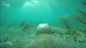 Take a Look at the Life of a Sea Turtle With This Must-See Turtle Cam