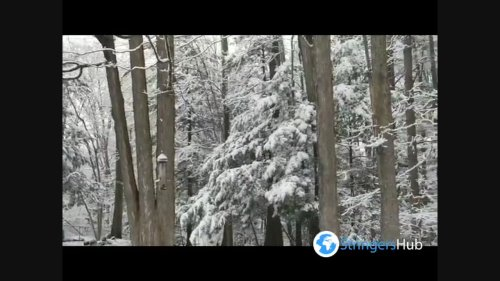 US: Northeastern States wake up to April Fool's Day snow