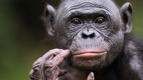 Top 10 Smartest Animals — Plus Other Fun Animal Facts