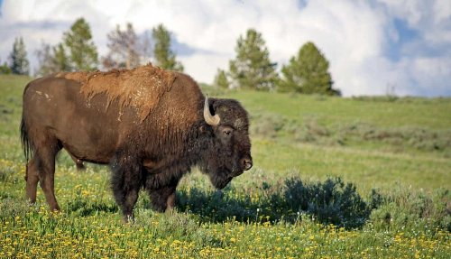Expert Tips To See Animals In These Popular National Parks