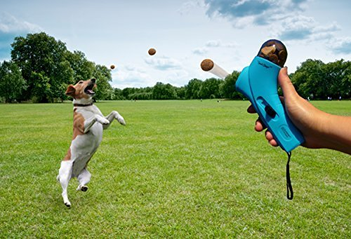 Spoil Your Dog with These Toys & Treats