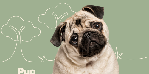 Chill Out With the 13 Calmest Dog Breeds