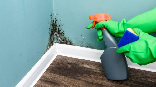 5 Ways to Clean Mold From the Most Important Surfaces In Your Home