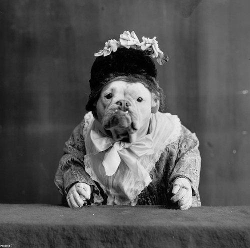 Purr-Fect Pet Photography Tips & Inspiration!