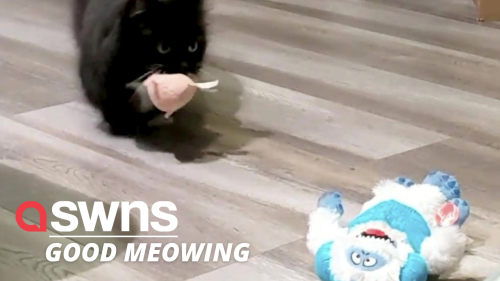 Cat wakes owner up by bringing them a different toy EVERY MORNING