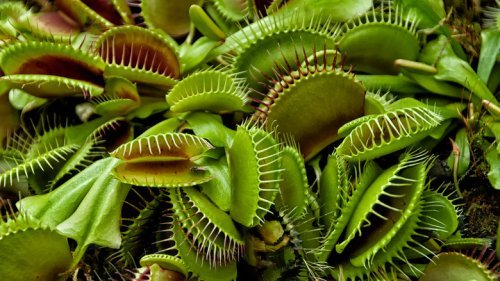 Why You Should Probably Stop Buying Carnivorous Plants