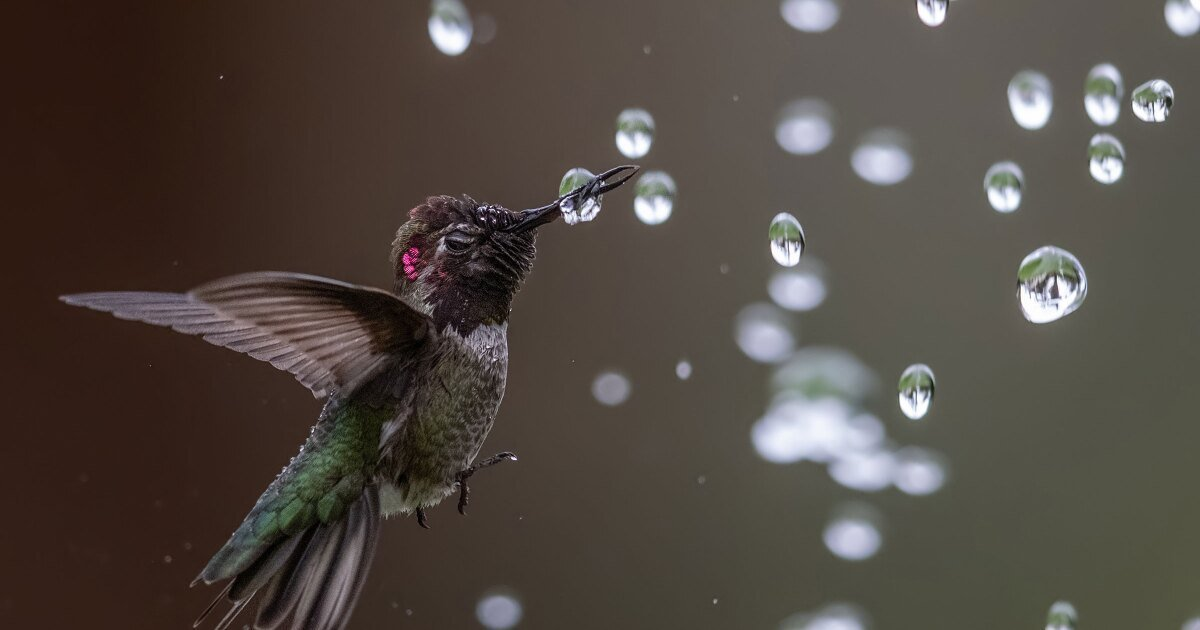 The best bird photography of 2021