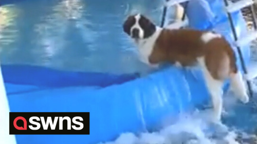 Hilarious moment dog destroys swimming pool and floods entire garden