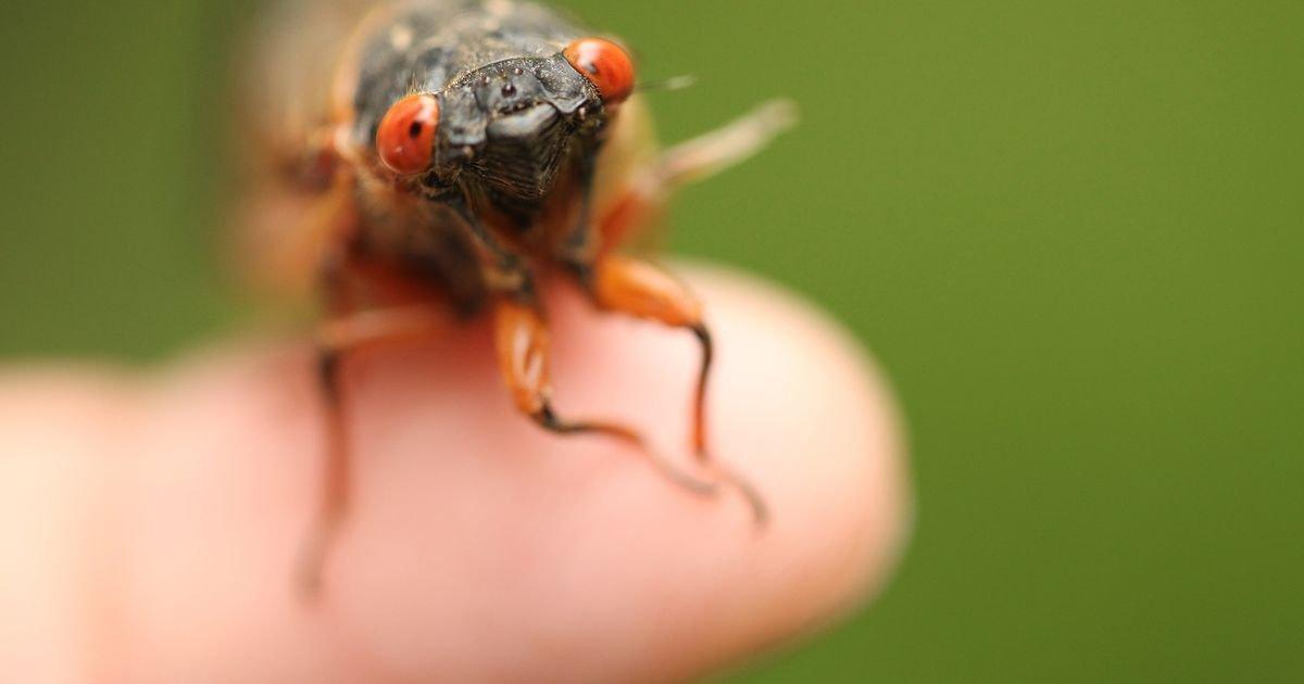 See Joe Biden Feel the Cicadas' Wrath + Why Cicadas Aren't Gross, *You're* Gross