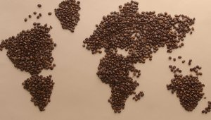 World's Best Coffee Bean Found!