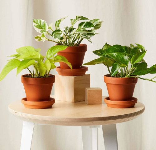 Indoor Plants: What Plant Parents Need to Know (and Grow!)