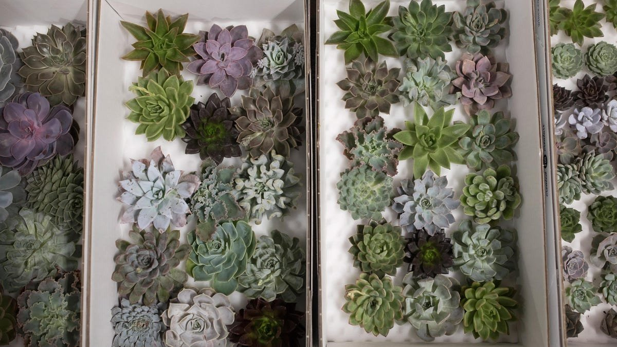 How to Keep a Succulent Alive and Other Gardening Tips