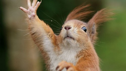 Squirrels Can Be Left- or Right-handed — Plus Other Squirrel Facts