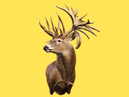 World record whitetails that weren't