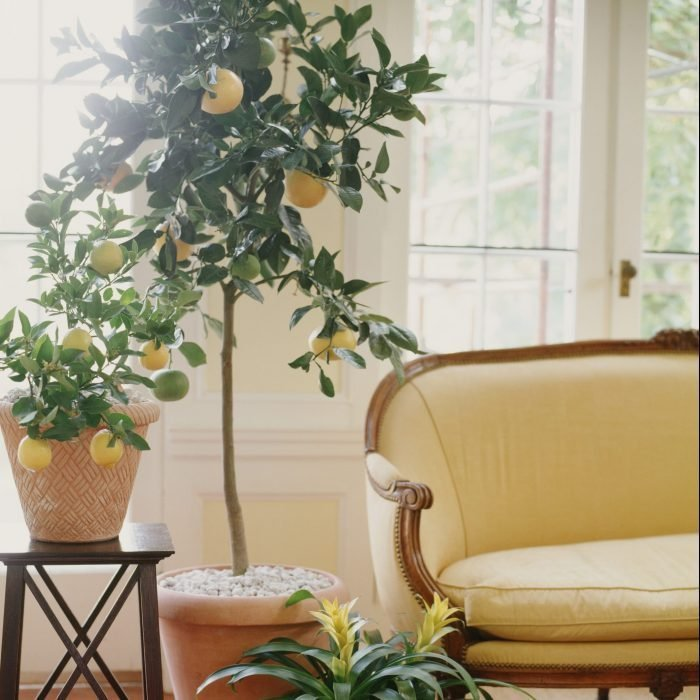 The Best Indoor Plants for Your Home