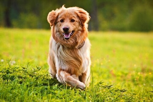14 Best Vitamins for Dogs