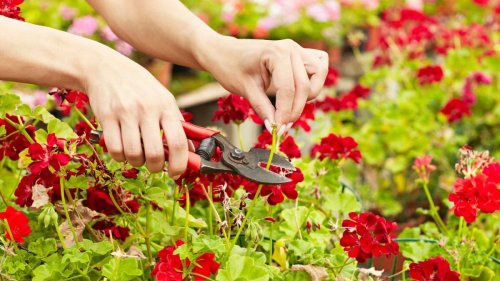 This is all the latest garden advice you might have missed this week