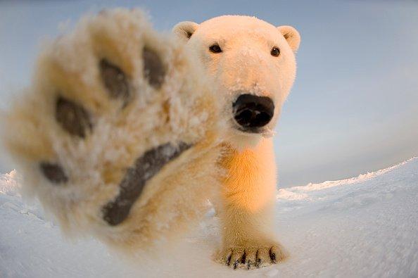 Biden Moves to Block Drilling in Alaska's Arctic National Wildlife Refuge