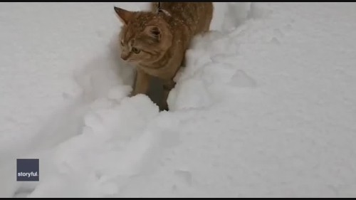 Kitten Explores Deep Snow After Winter Storm in Finland