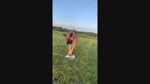 Baby Steps as German Shepherd Tries to Beat the Heat With Dog Water Fountain