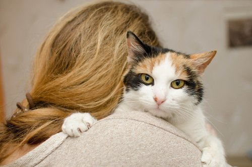The Most Affectionate Cats in the World
