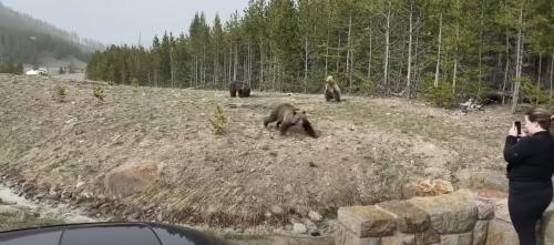 Two women face jail time for bear harassment