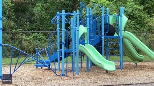 Mama Bear and Cub Enjoy Slides at School Playground in North Carolina