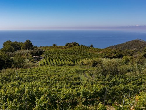 A treacherous terrain is at the heart of Liguria's lush and food-friendly wines
