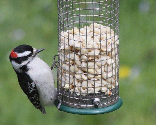 The Best Bird Feeders to Attract Birds