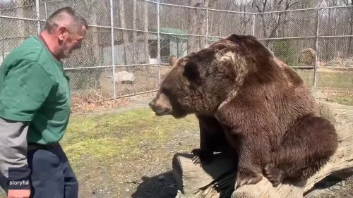 Brown Bear and Rescue Center Founder Bond During Playtime