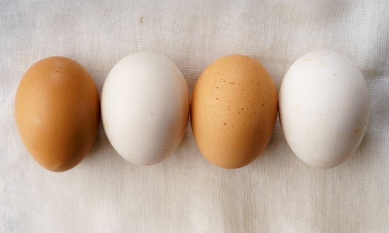 Should You Buy Brown or White Eggs? Which Is Better? Dietitians Weigh In.