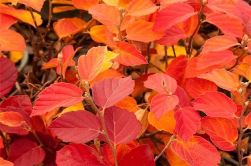 The Best Plants to Grow in September