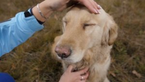 Your Dog or Cat Might Be Doing These Certain Things To Show How Much They Love You