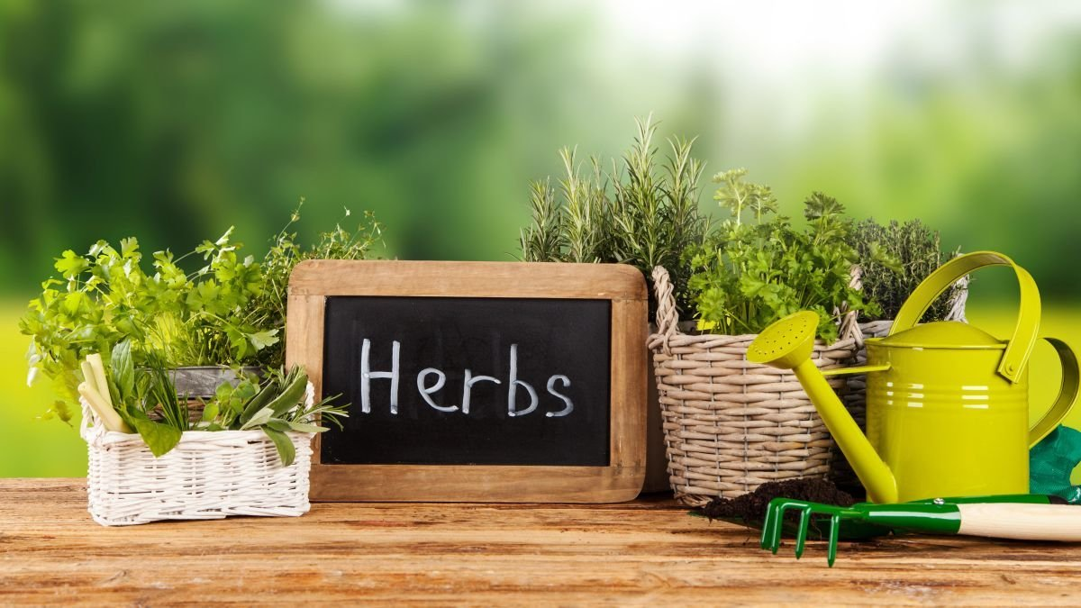 This is how you can grow your own herbs at home