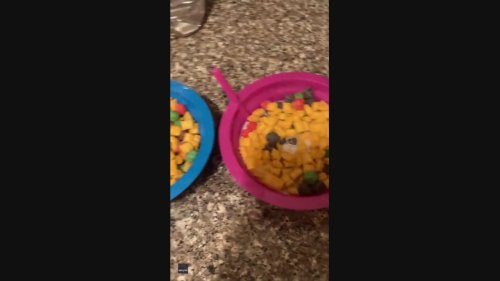 California Mother Pranks Children With Frozen Cereal