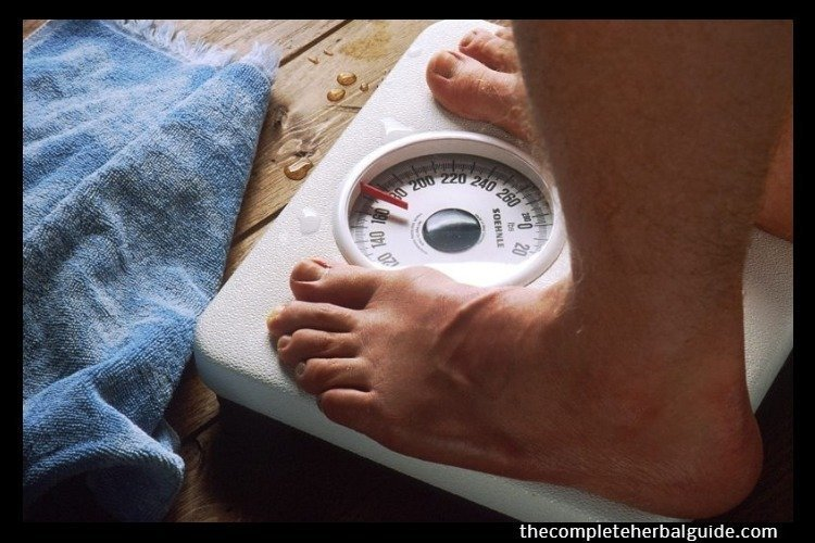 Ultimate Guide To Gain Weight