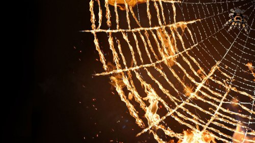 What If We Killed All Spiders?