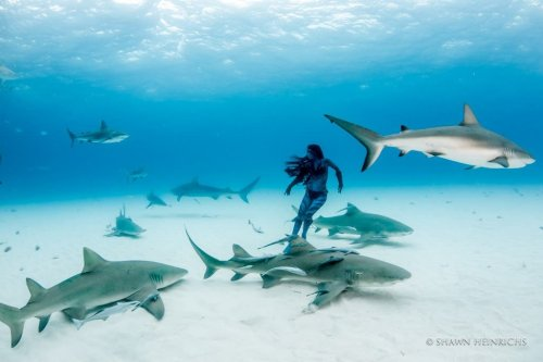 Sharks! Photographing These Very Misunderstood Creatures