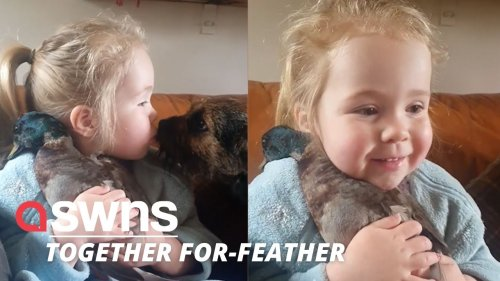 This adorable footage of a young girl cuddling her pet DUCK will absolutely melt your heart! (RAW)