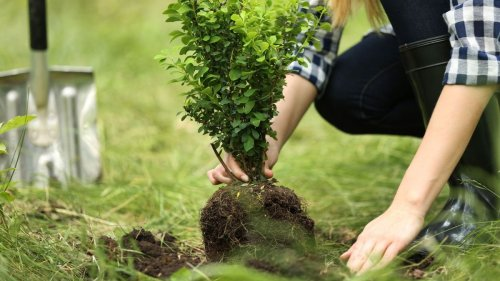 The ultimate guide to adding trees to your garden