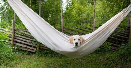 Magazine - Hiking and Camping