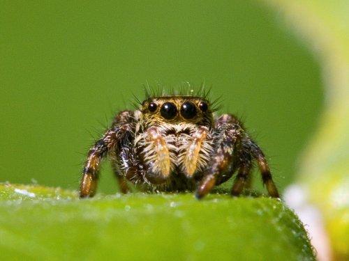Faszination Spinnen