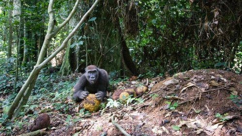 You can now hear rainforest sounds worldwide—and 4 more captivating tales