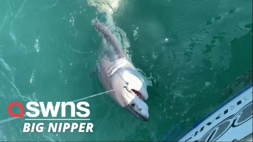 This is the moment an unsuspecting fisherman reeled in a seven-foot GREAT WHITE SHARK (RAW)