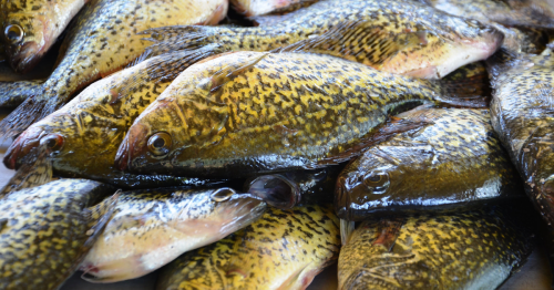 How to catch crappies all summer