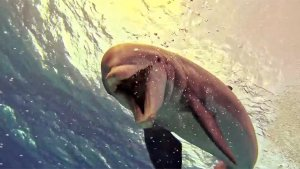 Must See! Extroverted Dolphin Puts on Impromptu Underwater Show for Unsuspecting Scuba Diver